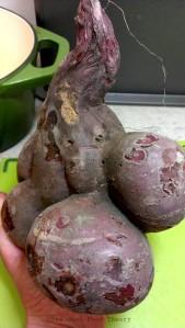 Sweet potato_wtr